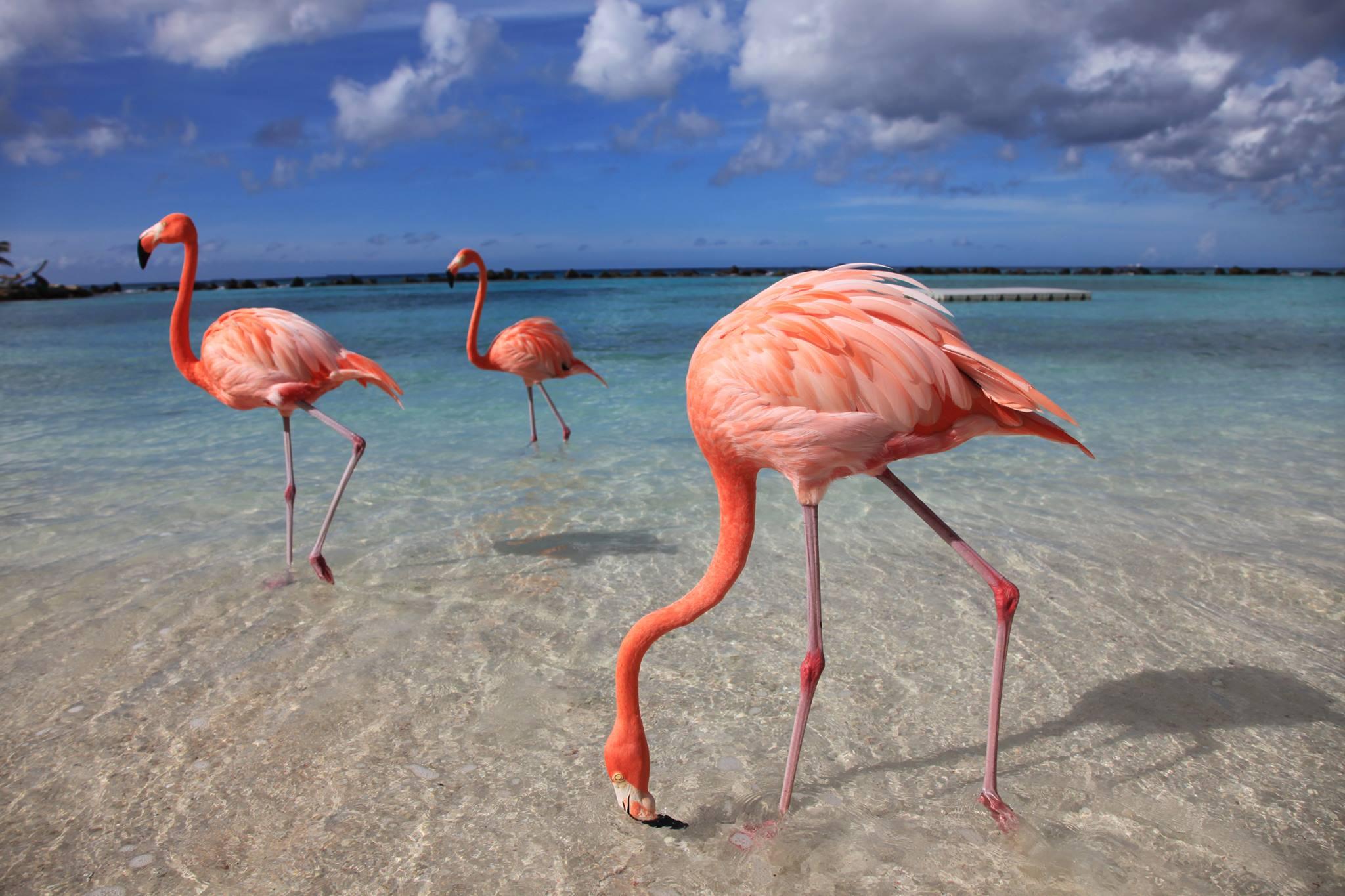 скорпионами фламинго на джербе фото отзывы невероятно
